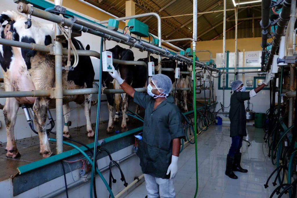 Alepa Dairy Milking