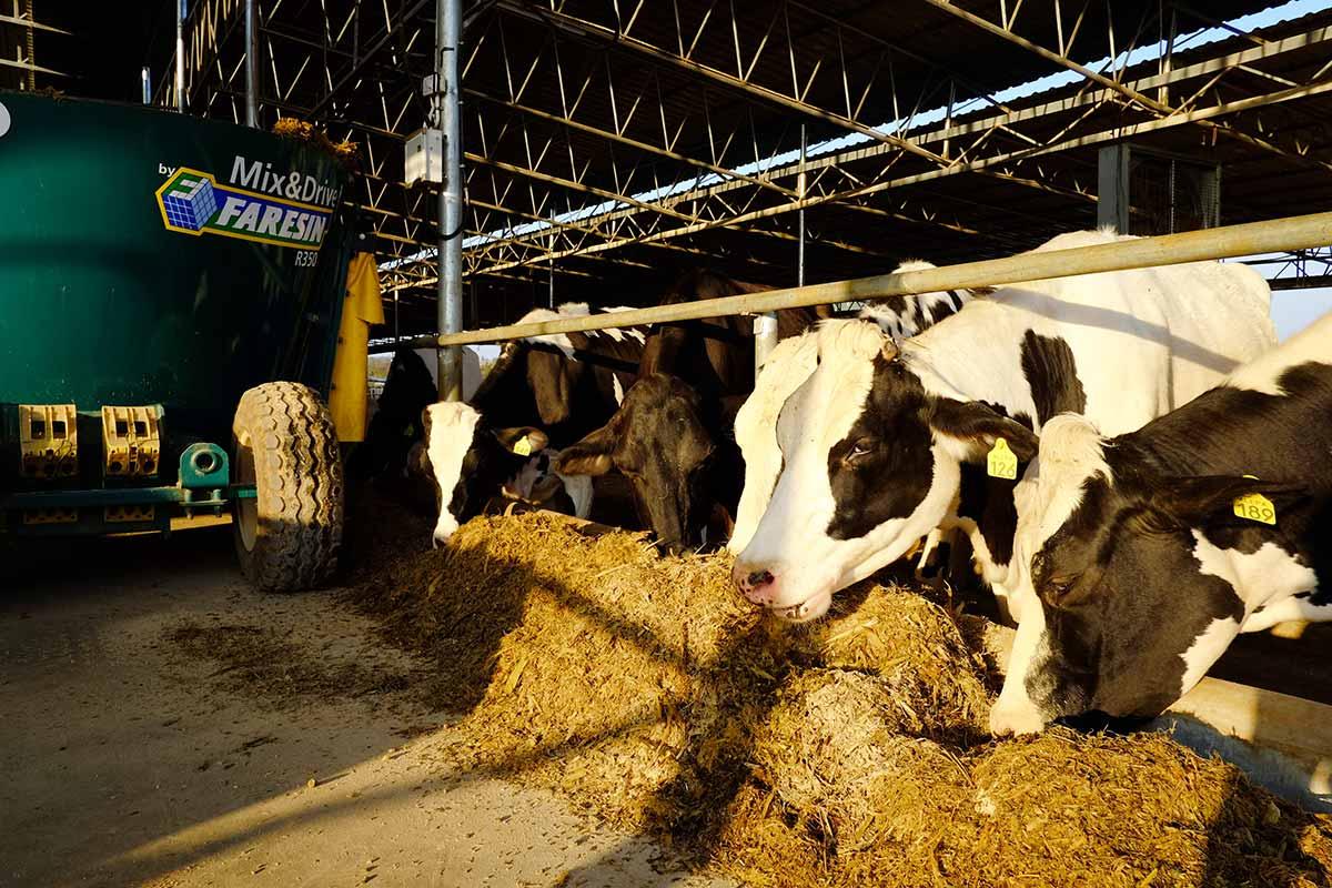 Alepa Dairy Nutrition Planning